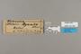 124184 Acraea aganice labels IN