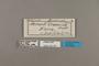 124187 Actinote anteas crassinia labels IN