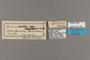 124198 Acraea oreas angolanus labels IN