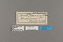 124208 Acraea encedon labels IN