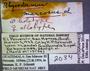 2034 Rhysodesmus marcosus HT IN labels