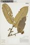 Virola calophylla (Spruce) Warb., BOLIVIA, F