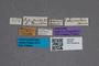2819482 Bledius lativentris ST labels IN