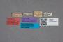2819500 Leptusina bosnica ST labels IN
