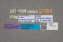 2819501 Astilbus montanus HT labels IN