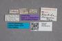 2819503 Parabrachida decipiens ST labels IN
