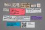 2819507 Oxypoda opacicollis ST labels IN