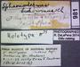 981 Sphaeriodesmus bukowinus HT IN labels