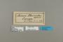 124212 Acraea pharsalus labels IN