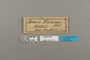 124214 Acraea violarum labels IN