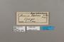 124218 Acraea serena labels IN
