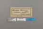 124227 Acraea cerasa labels IN