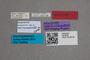 2819508 Dasycerus concolor HT labels IN
