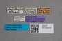 2819515 Amphichroum albanicum HT labels IN