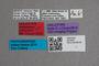 2819516 Anthobium amicorum HT labels IN