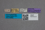 2819523 Anthophagus bosnicus ST labels IN