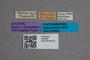 2819526 Anthophagus hummleri ST labels IN