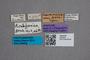 2819532 Artochia californica ST labels IN