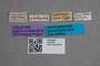 2819535 Geodromicus bodemeyeri HT labels IN