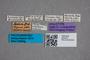 2819537 Geodromicus maderi HT labels IN
