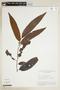 Virola venosa (Benth.) Warb., BOLIVIA, F