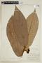 Virola mollissima (Poepp. ex A. DC.) Warb., PERU, F