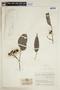 Virola elongata (Benth.) Warb., COLOMBIA, F