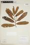 Virola venosa (Benth.) Warb., BRAZIL, F