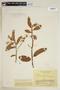 Virola carinata (Benth.) Warb., COLOMBIA, F