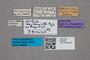 2819548 Lesteva longicornis ST labels IN