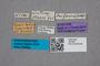 2819551 Lesteva heeri ST labels IN