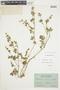 Geranium chilloense image