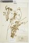 Geranium diffusum image