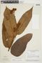 Virola loretensis A. C. Sm., BRAZIL, F