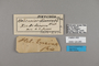 124285 Heliconius ethilla narcaea labels IN