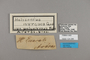 124286 Heliconius ethilla polychrous labels IN