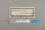 124288 Heliconius ethilla narcaea labels IN