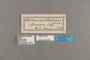 124292 Neruda metharme labels IN