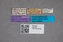 2819556 Philonthus bolivianus HT labels IN