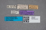 2819558 Philonthus brasilianus ST labels IN
