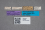 2819560 Philonthus cordilleranus HT labels IN