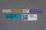 2819565 Philonthus excellens HT labels IN