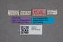 2819574 Olophrum recticolle var curtipenne ST labels IN