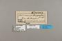 124309 Heliconius numata ethra labels IN
