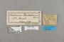 124311 Heliconius pardalinus labels IN