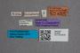 2819582 Arpedium testaceum ST labels IN