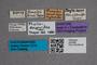 2819585 Phyllodrepa hummleri ST  labels IN