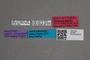2819587 Giulianium newtoni HT labels IN