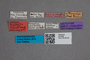 2819588 Boreaphilus velox var hummleri LT labels IN