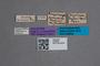 2819589 Coryphiodes deubeli HT labels IN